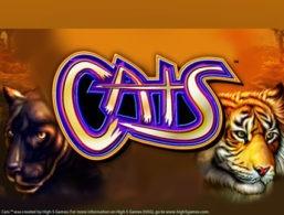 Cats – IGT